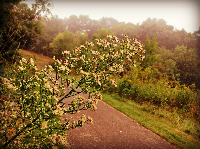 I couldn't help but take this shot of the blooms intersecting the path.