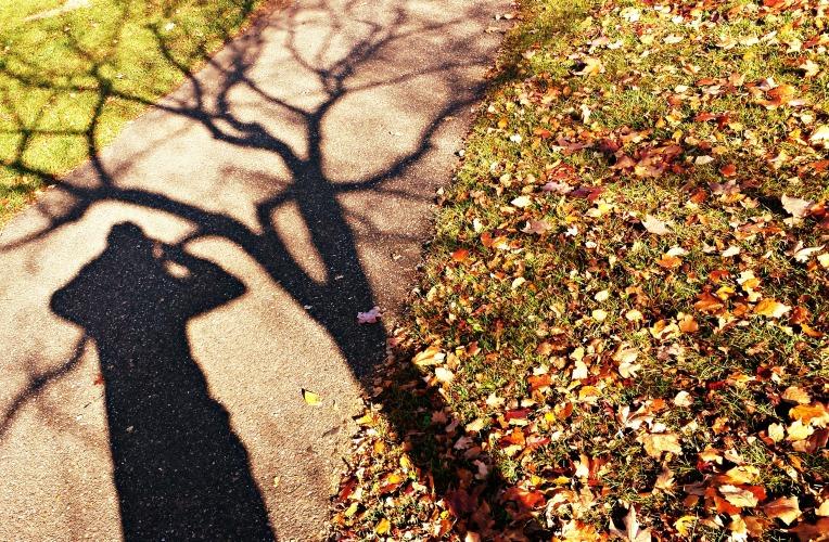 shadow_tree.jpg