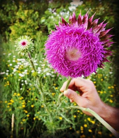 coolflower_crop_vert
